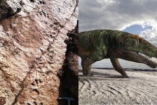 Sulle Alpi scoperte orme fossili di grandi coccodrilli risalenti a 250 milioni di anni fa