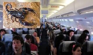 Scorpione punge un passeggero in aereo, terrore su un volo di linea in Brasile