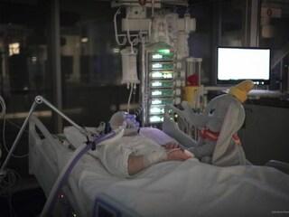Intubato in terapia intensiva, tiene la mano a 'Dumbo': la foto del paziente covid commuove il web