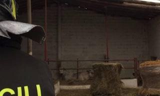 Tragedia sul lavoro a Reggio Emilia: agricoltore cade nella vasca dei liquami e muore