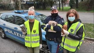 Trasporta nove cagnolini in un contenitore di plastica: sanzionato un 46enne