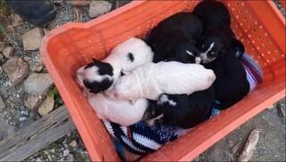 Otto cuccioli buttati in un pozzo a Palermo: salvi per miracolo grazie a una famiglia