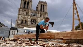 Cattedrale di Notre Dame: saranno abbattute 1.500 querce secolari per ricostruirla