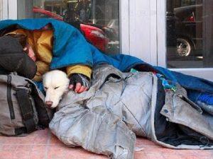 Modena, senzatetto chiedeva l'elemosina con una cagnolina: sequestrato il cucciolo