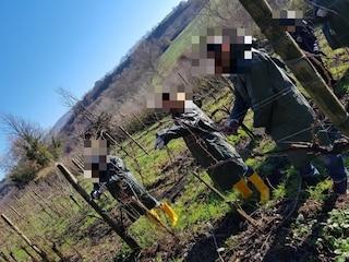 Lavoratori irregolari per le potature nelle vigne venete: scoperti 14 stranieri in nero