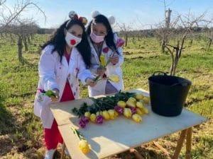 Puglia, il campo di tulipani chiude per la zona rossa: fiori portati a medici e pazienti Covid in ospedale