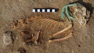 Egitto, trovato antico cimitero di animali: gatti e cani sepolti come persone