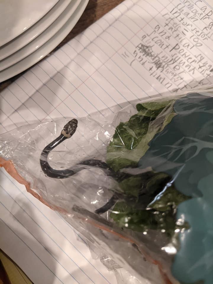Il serpente ritrovato in un'insalata in Australia –1 (foto Facebook)
