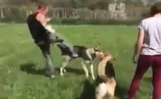 Addestratore di animali per la tv prende a calci un cane: denunciato dalle associazioni animaliste