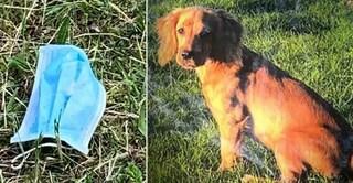 """Trova mascherina e la mangia, il cagnolino Oscar muore tra atroci sofferenze: """"Non gettatele a terra"""""""