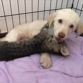 """Lanciata da un'auto in corsa, ora la cagnolina Hola sta bene e cerca casa con l'amica """"Micia"""""""