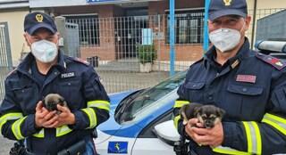Orvieto, agenti della polizia stradale salvano cuccioli: vagavano lungo l'autostrada