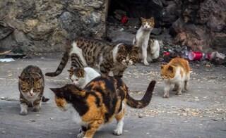 Chicago ha trovato una soluzione al suo problema con i topi: liberare i gatti randagi catturati