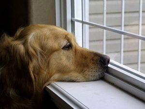 A Recoaro i cani non possono abbaiare: multe fino a 500 euro per i padroni