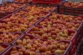 Vendevano in Italia pomodoro egiziano contaminato da pesticidi: maxi sequestro dei carabinieri