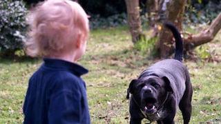 Irlanda, cane sbrana una neonata mentre dorme nella culla: Mia muore, aveva 3 mesi