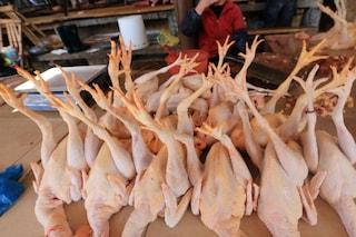 Cosa sappiamo del nuovo caso di influenza aviaria registrato in Cina