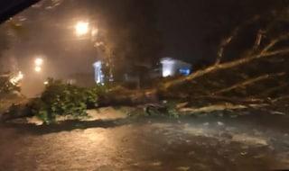 Maltempo Veneto, albero si schianta mentre passa il motorino: 46enne muore sul colpo