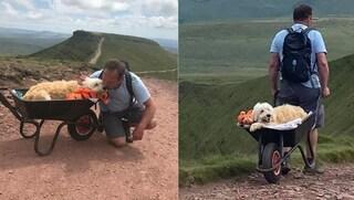 Il cane sta morendo, padrone lo porta a braccia sulle sue colline preferite per l'ultimo addio