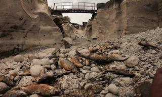 Alcantara, il secondo fiume della Sicilia è sparito: moria di pesci e anche le famose gole soffrono