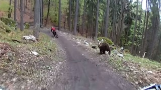 USA, orso insegue un ciclista nel bosco e lo sbrana