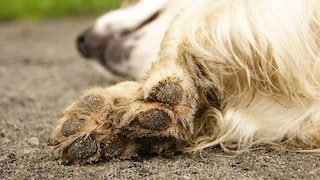 Tortura e uccide il cane lanciandolo ripetutamente in mare: choc sulla spiaggia di Praia a Mare