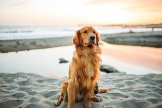 Bimbo di 10 anni in difficoltà in mare salvato da cane-bagnino