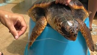 """Lampedusa, nel centro per salvare le tartarughe: """"Sono piene di plastica"""""""
