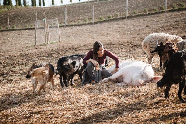 Rifugi e santuari: luoghi dove gli animali vivono liberi e salvi dalla violenza dell'uomo