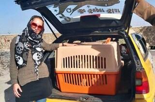 La corsa contro il tempo della clinica veterinaria per portare via centinaia di animali da Kabul