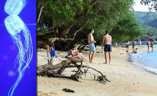 Thailandia, bimbo di 9 anni morto in spiaggia: è stato punto da una medusa velenosissima