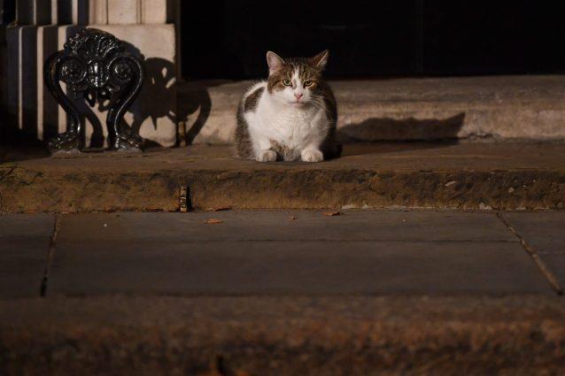 """Il mistero del paese dove spariscono i gatti, 50 da maggio: """"Succede sempre di sera"""""""