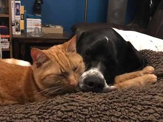 Cane e gatto donatori di sangue per altri animali: la tenera storia di Spock e Weasley