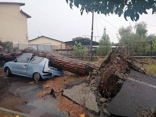 Trombe d'aria e grandine, maltempo in Toscana e Liguria: auto distrutte da alberi e allagamenti