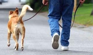 Dall'amante con la scusa della passeggiata del cane, l'animale lo tradisce e la moglie caccia entrambi