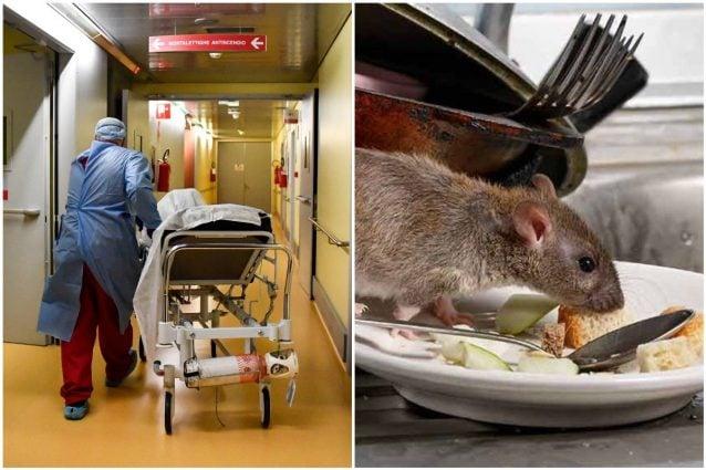 """Policlinico di Modena, topo morto sul cibo destinato al reparto oncologico: """"Fatto gravissimo"""""""
