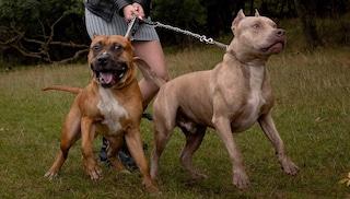 Anziana entra per sbaglio nel cortile di una villetta: sbranata da due cani davanti a una bimba