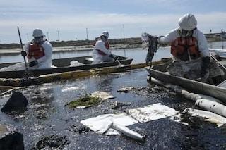 Usa, guasto a oleodotto in California: 500mila litri di petrolio in mare. Strage di pesci e uccelli