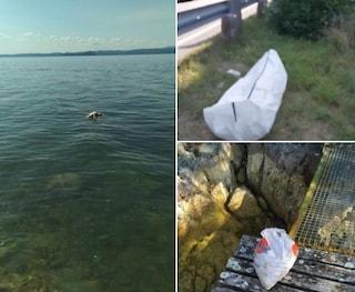 """Orrore al lago di Garda, cane fatto annegare con pietre al collo: """"Vergognaassoluta"""""""