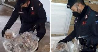 In Calabria sequestrati 235 ghiri congelati: è il cibo preferito dei boss di 'Ndrangheta, 3 arresti