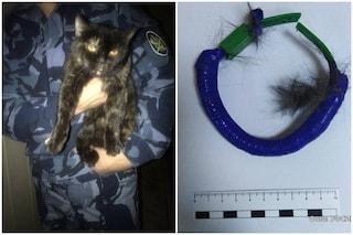 Russia, fermato dalla polizia gatto narcotrafficante: la marijuana nascosta nel collare