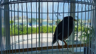 La storia dell'uccellino in gabbia evacuato dall'Afghanistan