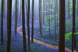 I 10 boschi più misteriosi in cui perdersi può essere davvero incantevole