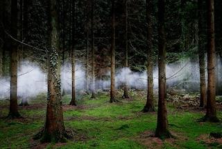Alberi come opere d'arte: le foreste più belle e spettrali che abbiate mai visto