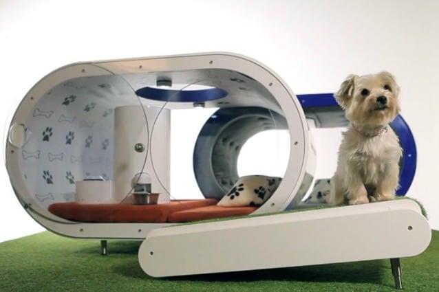 Samsung Dream Doghouse La Cuccia Super Tecnologica Per Cani Di Lusso