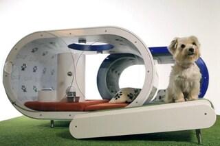 Samsung Dream Doghouse, la cuccia super tecnologica per cani di lusso