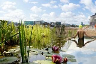 Londra: ecco la prima piscina al mondo che usa le piante per pulire l'acqua