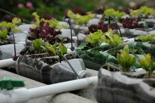 Come creare un tetto verde con le bottiglie di plastica
