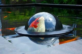 Il mondo sotto sopra: ecco la prima cupola che permette ai pesci di guardare all'esterno