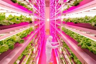 Giappone: ecco la più grande fattoria sotterranea del mondo